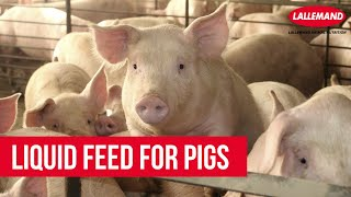 getlinkyoutube.com-Liquid Feed for pigs