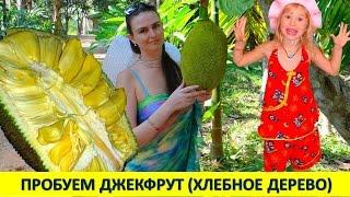 getlinkyoutube.com-ПРОБУЕМ ДЖЕКФРУТ (ХЛЕБНОЕ ДЕРЕВО) & ОТДЫХ В АМБАССАДОРЕ. Паттайя 2016 (14 часть, 9 день)