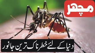 Top 10 Dangerous Animals In The World | All About Animals  [Urdu]