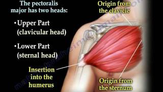 getlinkyoutube.com-Pectoralis Muscle ,tendon Tear - Everything You Need To Know - Dr. Nabil Ebraheim