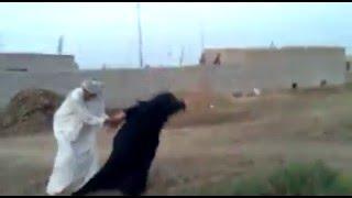 getlinkyoutube.com-شاهد امرأة عراقية تزوج عليهاا زوجهاا ماذا فعلت 2016 عمرك خسارة اذا متشوفة  مرعب