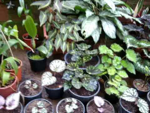 Plantas Ornamentais Tia Martha