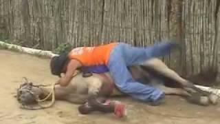 getlinkyoutube.com-cavalo de cachaceiro parte 2
