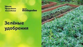 Зелёные удобрения — основа природного земледелия