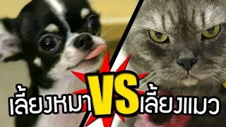 getlinkyoutube.com-เรื่องจริง!! เลี้ยงหมา VS เลี้ยงแมว