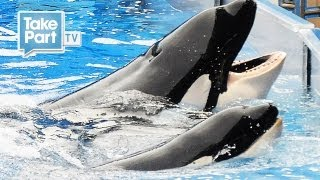 getlinkyoutube.com-DEATH AT SEAWORLD | EYEWITNESS INTERVIEW with Laura Surovik | The Cove | TakePart