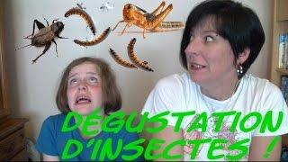 getlinkyoutube.com-🐛 🐝 🐜  Dégustation d'insectes 🐜 🐝 🐛
