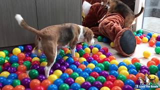getlinkyoutube.com-100K Subscriber Special! Minions , Ballpit , Cookiemonster , Mario , Chewbacca....ALL HERE!!!