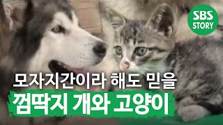 getlinkyoutube.com-설희와 나비(526회)_01