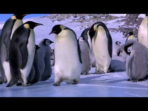 Penguin Fail - Best Bloopers from Penguins Spy in the Huddle