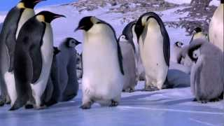 getlinkyoutube.com-Penguin Fail - Best Bloopers from Penguins Spy in the Huddle (Waddle all the Way)
