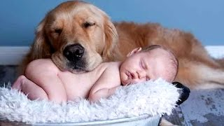 getlinkyoutube.com-Best Of Funny Cats And Dogs Love Babies Compilation 2015 || NEW