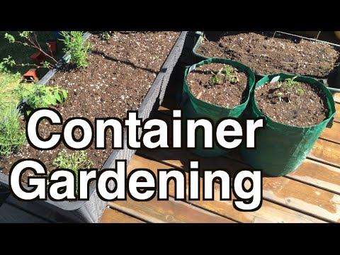 Grow a lot of Food in Small Spaces with Container Gardening