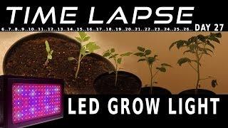 getlinkyoutube.com-LED grow light plant grow timelapse