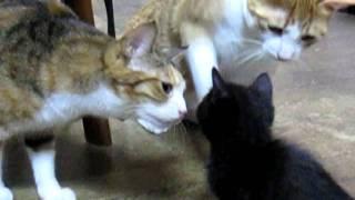 getlinkyoutube.com-子猫との微笑ましい初顔合わせ