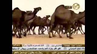 getlinkyoutube.com-منقية الشيخ فراج بن شمروخ العماني السبيعي