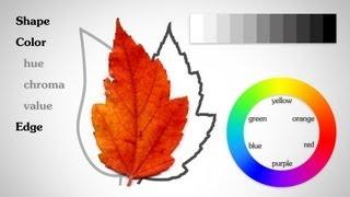 The Basic Elements - Shape Value Color Edge