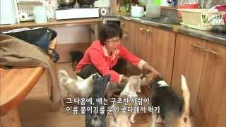 getlinkyoutube.com-MBC 다큐스페셜 - 엘리조의 특별한 유기견 사랑 20131118