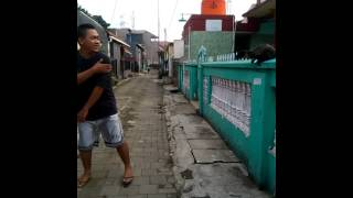 getlinkyoutube.com-Musang Akar