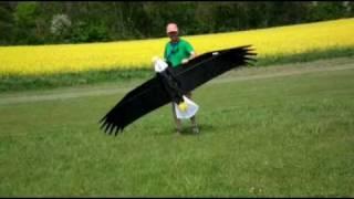 getlinkyoutube.com-Vector Kite EAGLE PremierRc.com