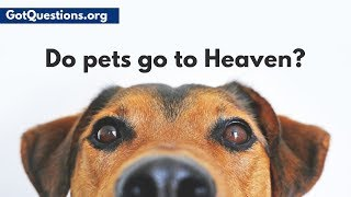 Do pets go to Heaven?  Do animals have souls? | GotQuestions.org