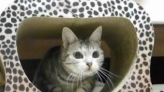 getlinkyoutube.com-母ちゃんにフラれた猫、おばちゃんに泣きつく! ~子猫の頃の気持ちを思い出した猫~ -Cat finds a lot of fun like a kitten