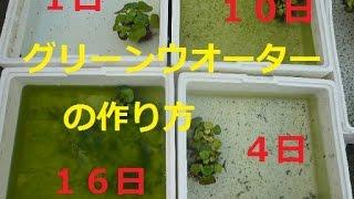 getlinkyoutube.com-メダカに最適な水グリーンウオーターの作り方☆詳しくは下の説明見てください楊貴妃めだか