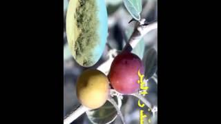getlinkyoutube.com-نباتات صحراوية