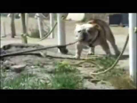 Videos de Animais Engraçados