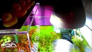 getlinkyoutube.com-[SUISOU物語]アクアスカイとヴォルテスを使った水草水槽