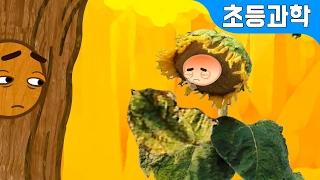 getlinkyoutube.com-나무가 되고팠던 해바라기의 슬픈 한해살이 | 식물의 한살이 비교 | 어린이 자연관찰 | 지니키즈★초등과학