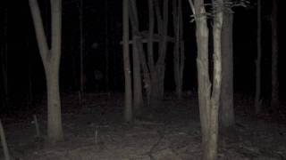 getlinkyoutube.com-Strange creature in picture. Creepy...