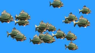 getlinkyoutube.com-Green Screen Group Fish Piranha Attack - Footage PixelBoom CG