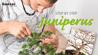 getlinkyoutube.com-STEP by STEP Juniperus