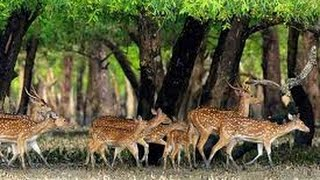 getlinkyoutube.com-Beautiful Places To See- The Sundarban, Bangladesh (Searching For A Tiger & Deer)