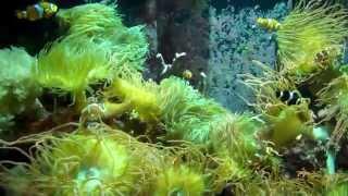getlinkyoutube.com-Mystic Aquarium, Mystic, CT 2012 Tour - 35 minute video