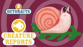 getlinkyoutube.com-Octonauts: Creature Report - Giant Kelp