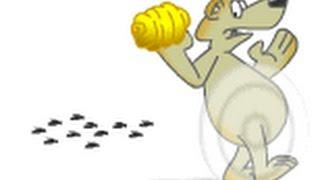 getlinkyoutube.com-Вывод из роевого сосотояния (начинающим пчеловодам)