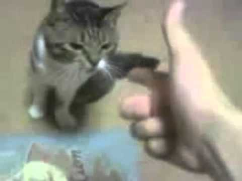 Cat plays dead after a finger shot!!!