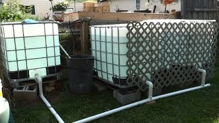 getlinkyoutube.com-Outdoor Tilapia Aquaponics Setup - Easy and Cheap - Part 1