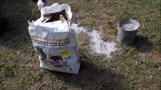 getlinkyoutube.com-Diatomaceous Earth & Wood Ash For Chicken Lice And Mites
