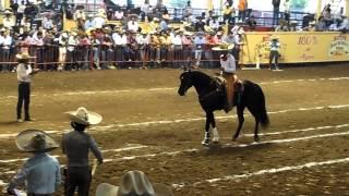 getlinkyoutube.com-El Cora Caballo de Puente de Camotlán Eliminatoria Caladero Abierto Millonario