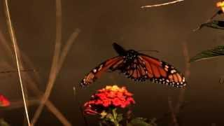getlinkyoutube.com-Butterfly Effect - The Cinematic Orchestra
