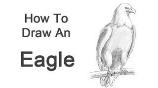 getlinkyoutube.com-How to Draw a Bald Eagle