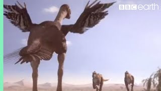 getlinkyoutube.com-Oviraptorid fights to protect nest - Planet Dinosaur - BBC