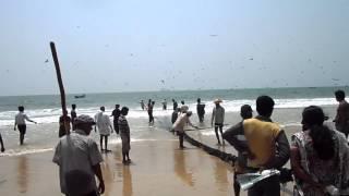 getlinkyoutube.com-Traditional fishing at Panambur Beach, Mangalore.MP4