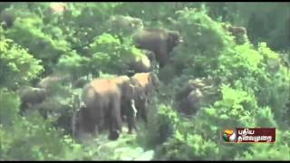 40 member strong crew involved in chasing a horde of 80 elephants into the forests of Karnataka