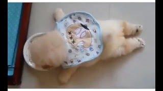 getlinkyoutube.com-여러가지 재미나고 귀여운 강아지들 영상 part.1