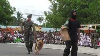 getlinkyoutube.com-Pertunjukan Anjing Perang