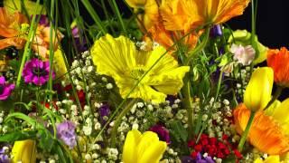 getlinkyoutube.com-Amazing 4k flowers 3840x2160p (Testfootage, Demomaterial)